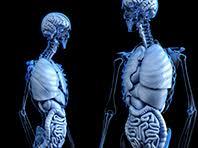 Ученые предложили неожиданный способ лечения и предотвращения остеопороза