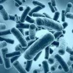 Как победить страшную кишечную инфекцию
