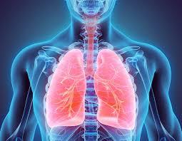 Противогрибковые препараты после трансплантации легких снижают риск смерти