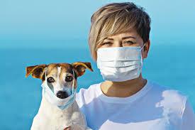 Можно ли заразиться COVID-19 от животного?