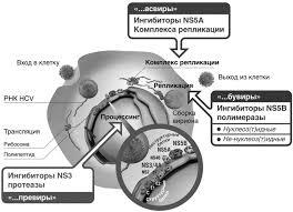 Внепеченочные пpоявления хpонической HCV-инфекции