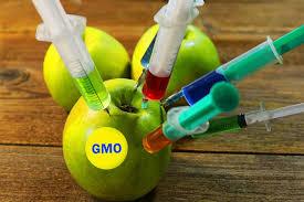 ГМО – добро или зло?