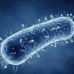 Биологи нащупали у супербактерий слабое место