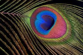 Ученые выделили 44 новых локуса, связанных с развитием глаукомы