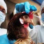 На юге России выявлено заражение новым птичьим гриппом