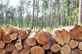 Вырубка лесов провоцирует болезни