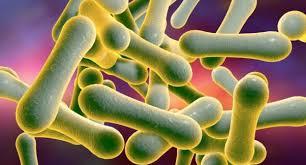 Исследование: дифтерия приобретает устойчивость к разным классам антибиотиков