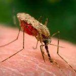 ВОЗ намерена к 2025 году добиться элиминации малярии в 25 странах