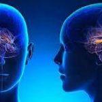 Пребиотики положительно влияют на головной мозг, показал эксперимент