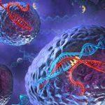 Коронавирус встраивается в геном человека?
