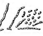 Диагностика мелиоидоза