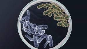 Люди становятся тревожными из-за бактерий в кишечнике