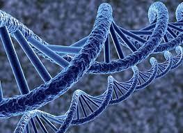 Скоро ДНК микробов будут использовать, как флешки